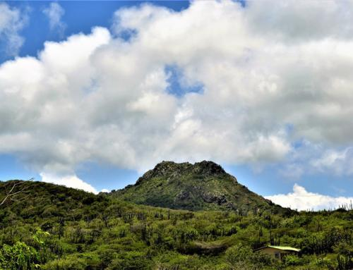 Nature: National Christoffel Park Curacao